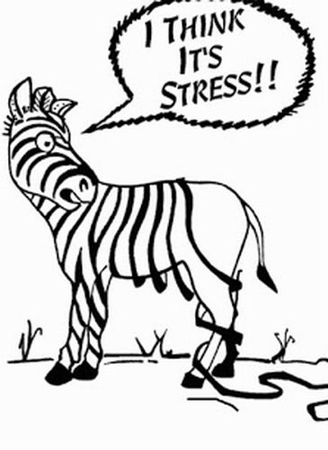 Zebra losing its stripes due to stress